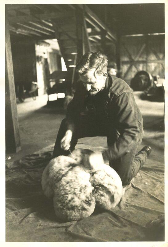 Shearing Photographs