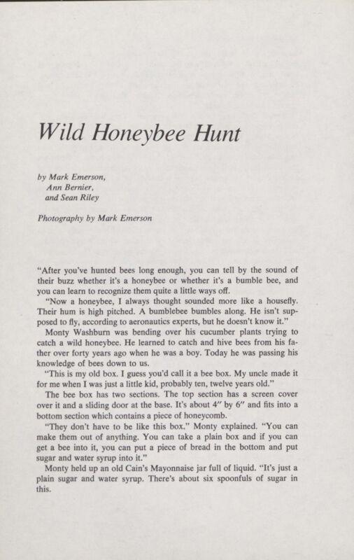 Wild Honeybee Hunt