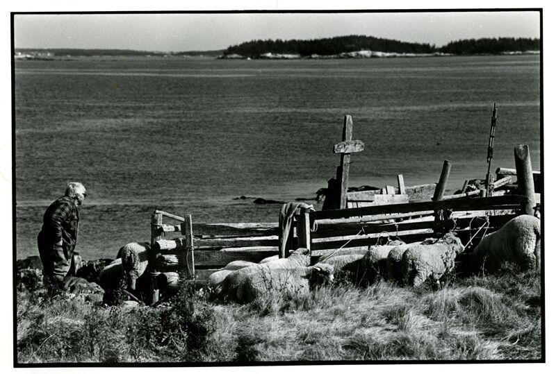 Jenny - Island Shepherdess Photographs