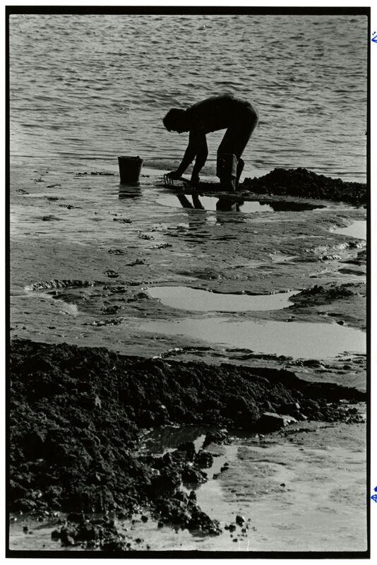 Scarborough Marsh Photographs