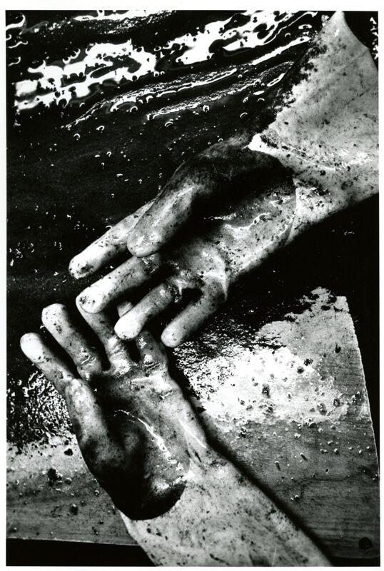 Urchin Processing Plant Photographs