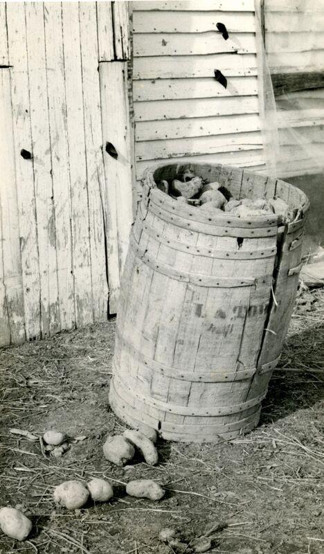 Potato Barrel Making Photographs