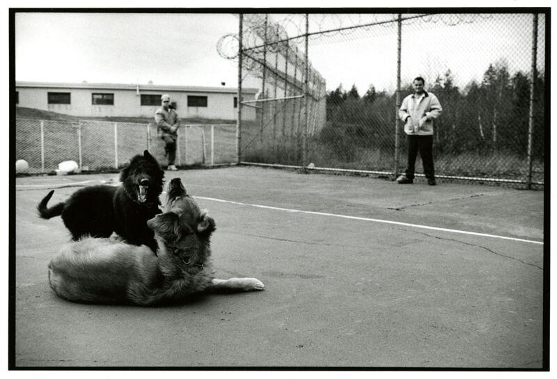 Good Boy - Prison Pups Program